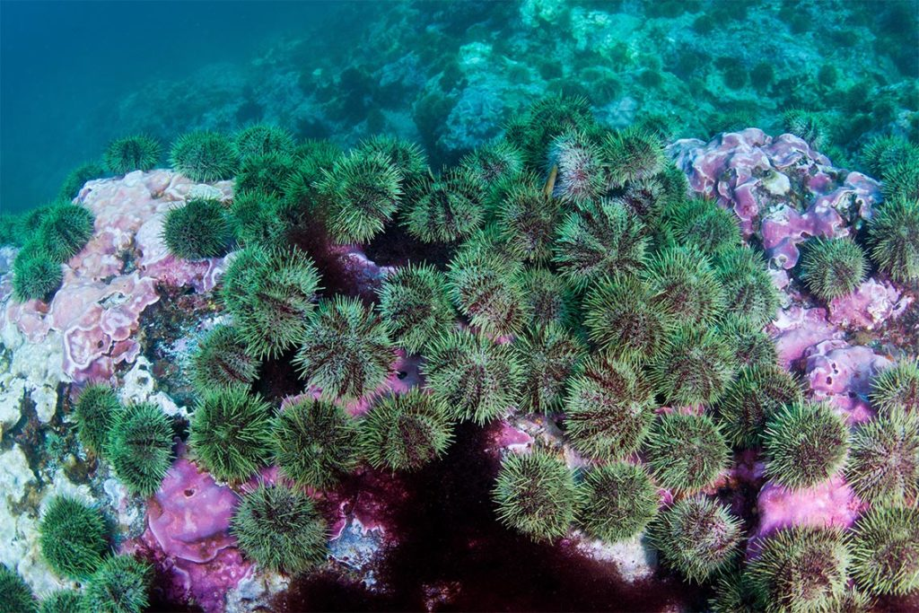 Massive reefs, built slowly over centuries to millennia, are now rapidly eroding (photo by J. Tomoleon).