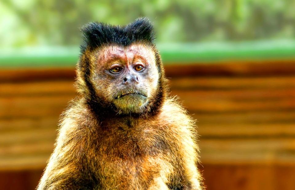 El verdugo de la conservación en Colombia