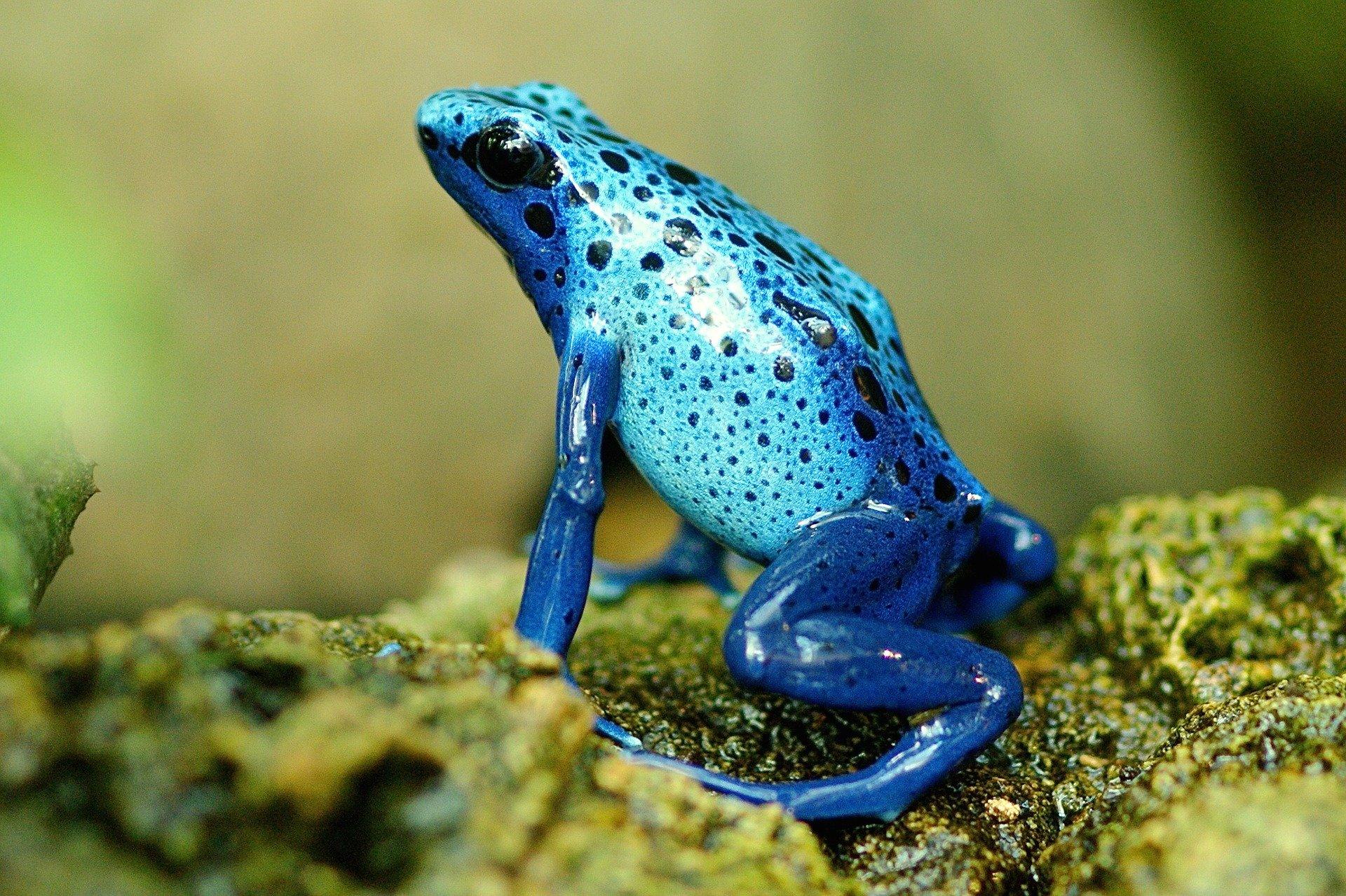 Anfibios especialmente vulnerables a la extinción
