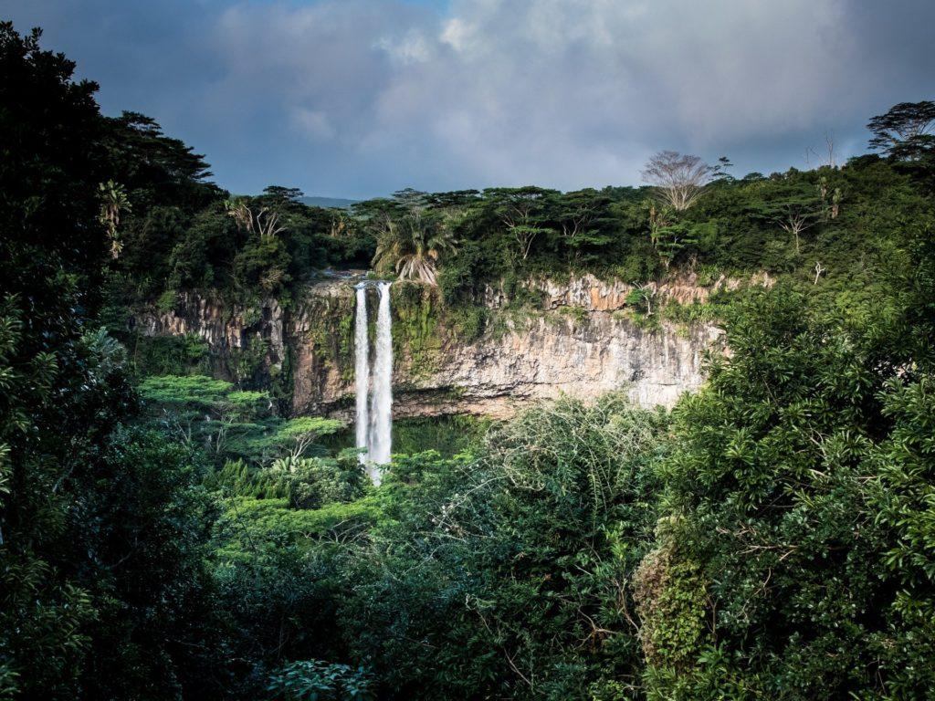selva paraíso global