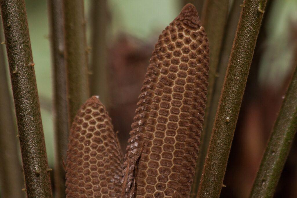 Foto :Cristina López Gallego, bióloga de la Universidad de Antioquia