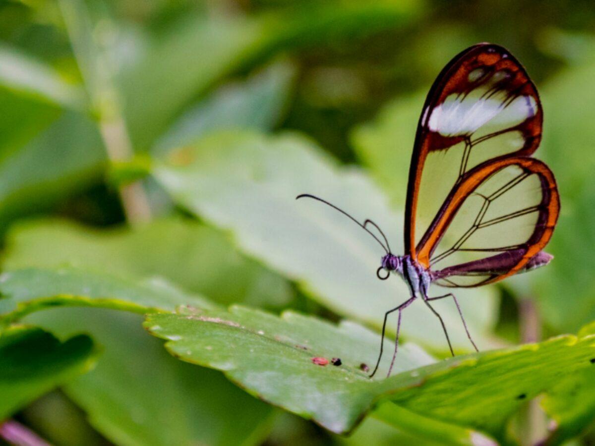 mariposa portada