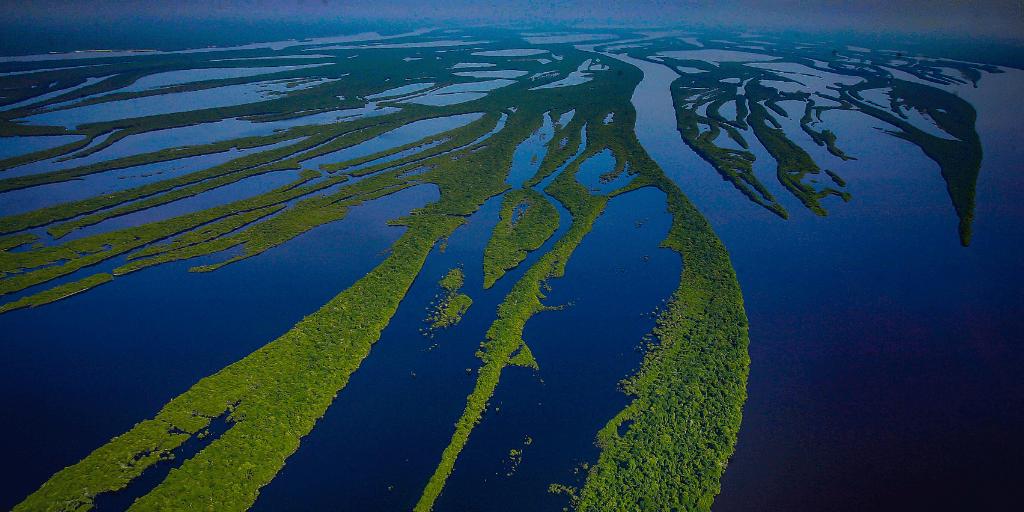 """""""Si se reduce la biodiversidad, la Naturaleza y la humanidad sufrirán""""Partha Dasgupta"""
