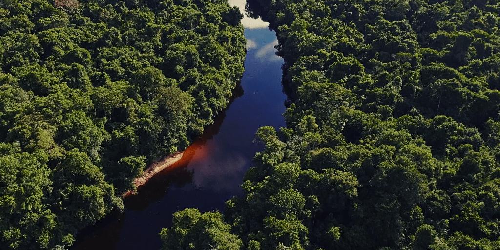 La biodiversidad permite que la Naturaleza sea productiva, resiliente y adaptable. De la misma manera que la diversidad dentro de una cartera de activos financieros reduce el riesgo y la incertidumbre.