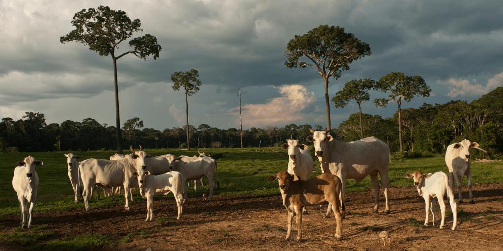Un proveedor del Grupo Éxito está codificado para funcionar como intermediario con los ganaderos de una región.