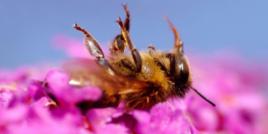 En los últimos cuatro años en el país, el número de colmenas afectadas asciende a 16 mil por año y cada colmena tiene 50.000 abejas aproximadamente.