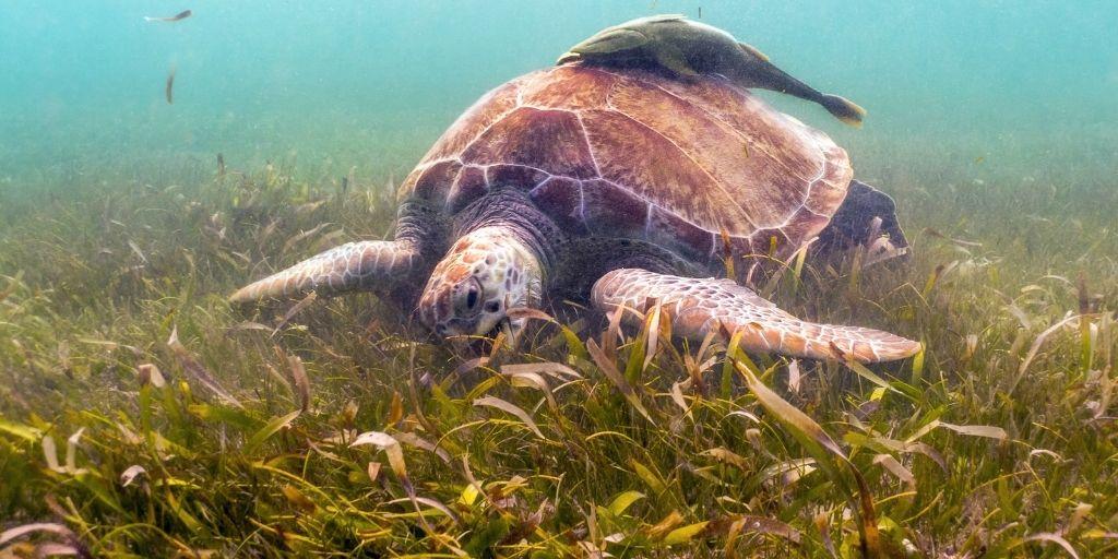Al secuestrar carbono y proteger las costas, los pastos marinos pueden ayudar a las comunidades a mitigar y adaptarse al cambio climático.