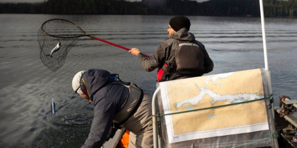Dr Emiliano Di Cicco and Dr Andrew Bateman co-authors of the study sampling wild Pacific salmon Credit Amy Romer