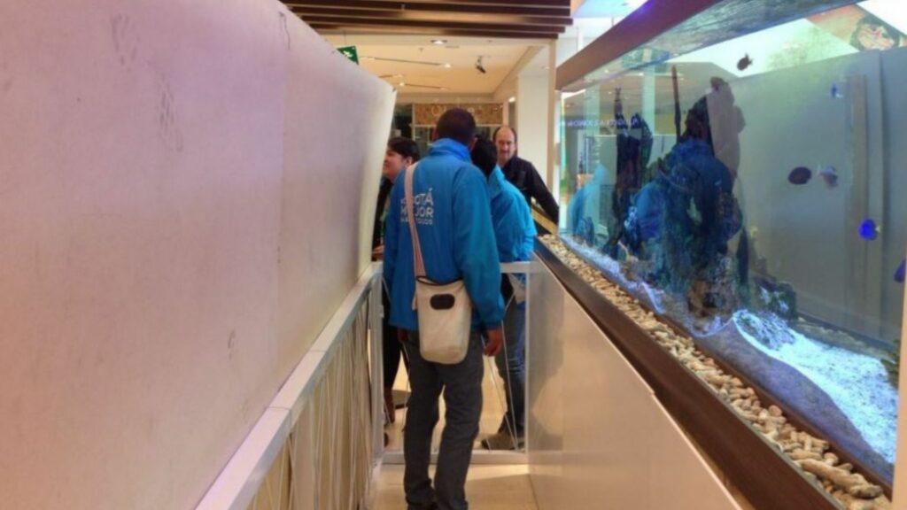 Los peces fueron decomisados y sacrificados por la Secretaria de Ambiente en el año 2017.