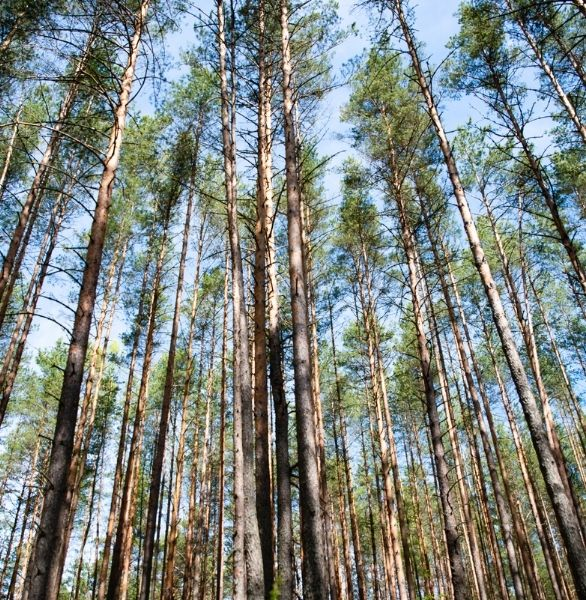 bosques para papel