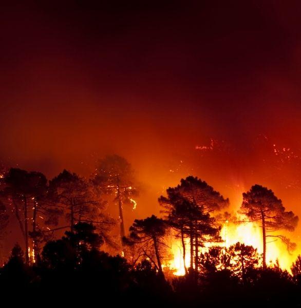 incendios forestal