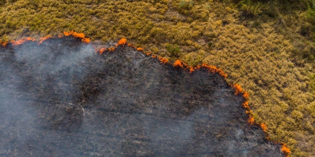 En el 2020 los incendios en Brasil acabaron con el 25% del área correspondiente al Pantanal.