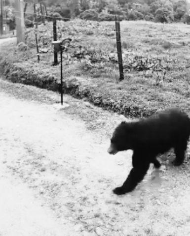 oso blanco y negro